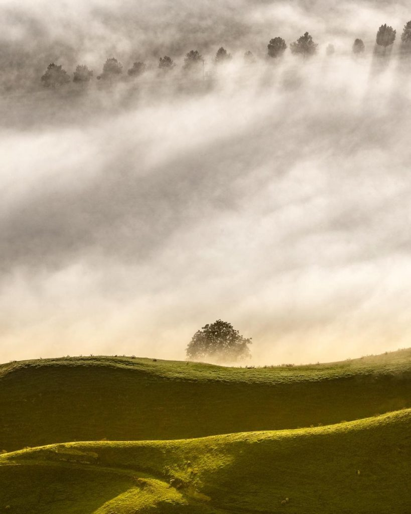 A meadow under thick mist