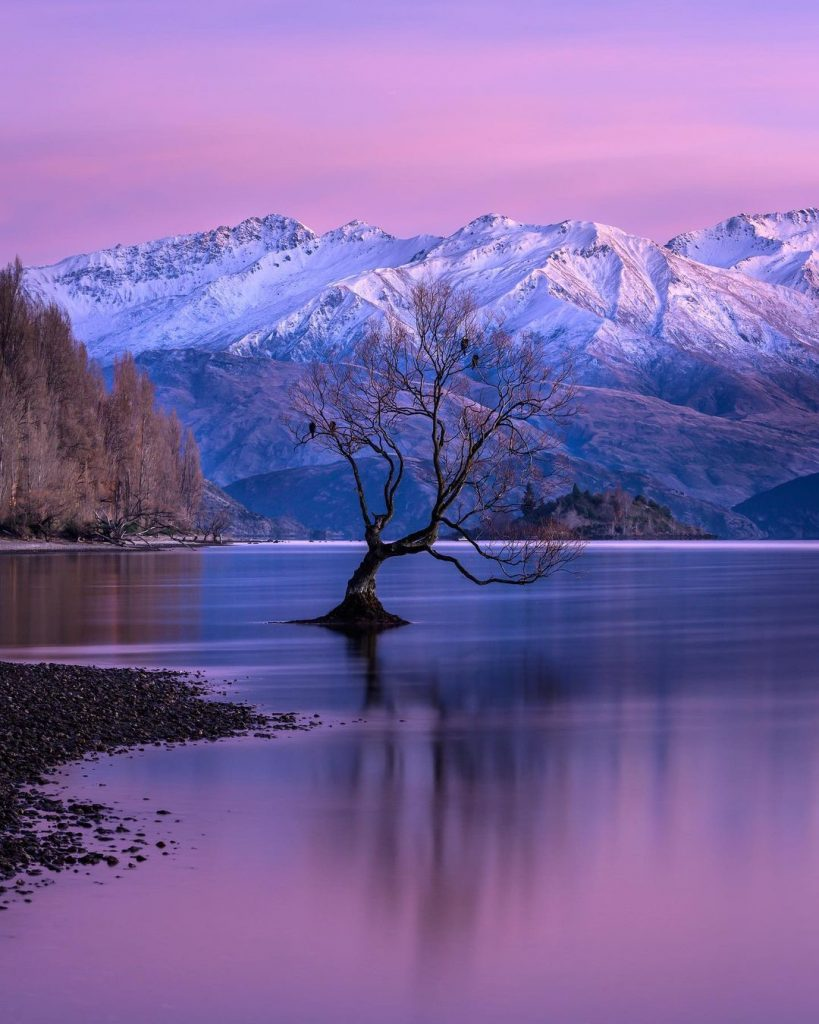 photographs of a tree in a peaceful lake under pink sunset
